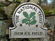 Dora's Field