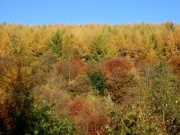 Macclesfield Forest, Autumn Colours