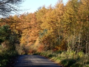 Macclesfield Forest, Road