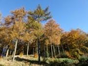 Macclesfield Forest, Colourful Trees