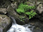 River Crafnant