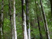 Monsal Trail Lime Kilns
